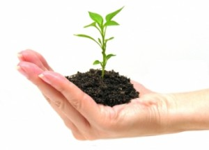 Growth as a Goal in The Michael Teaching - From even the smallest seedlings grow mighty trees