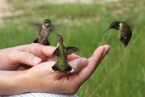 Hummingbirds share when there is plenty